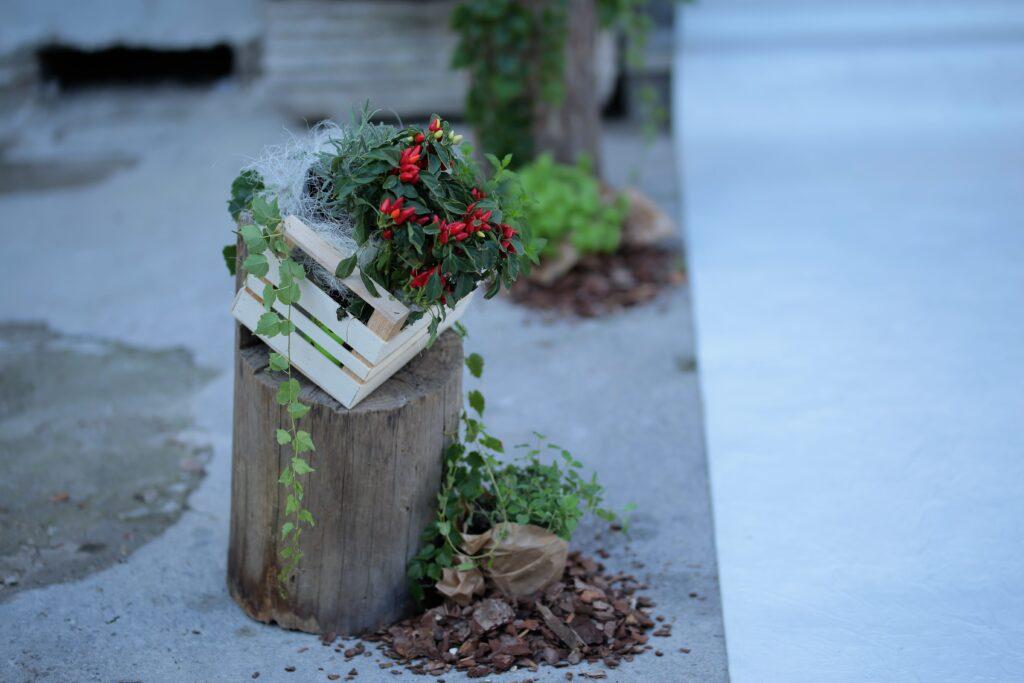 Natural style :peperoncini e erbe aromatiche