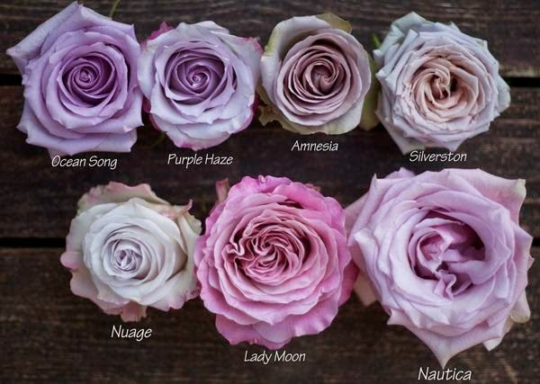rosa per wedding