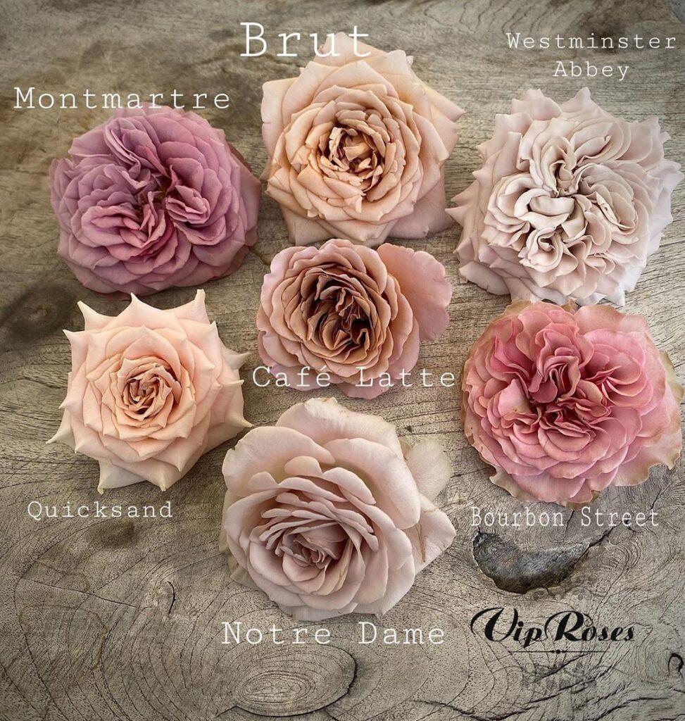 rose cipria e rosa